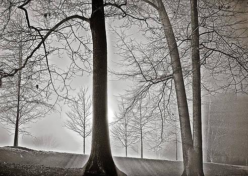Shining Light by Rod Kaye