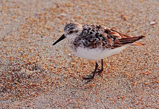 Shore Bird at Sunrise by Sandi Blood