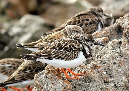 Shorebird Huddle by Theresa Willingham