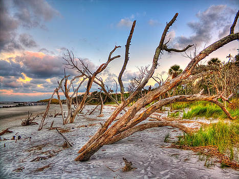 Shoreline Beach Driftwood and grass by Jenny Ellen Photography