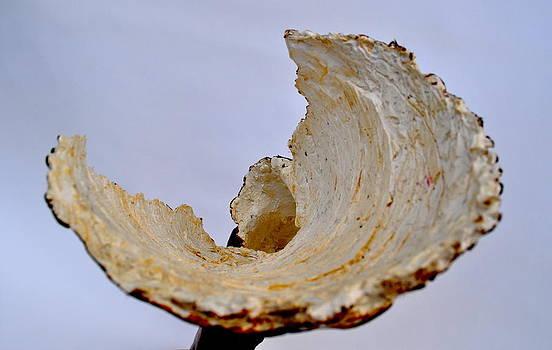 Shoulder Shell by Jacqueline Cappadora