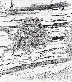 Shrub in Sedimentary Rock by Inger Hutton