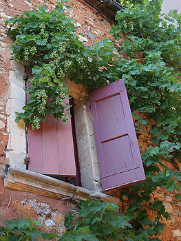 Shutters and Grapevines by Sandra Anderson