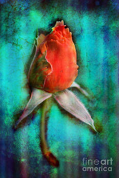 Shy Allure by Crystal June Norton