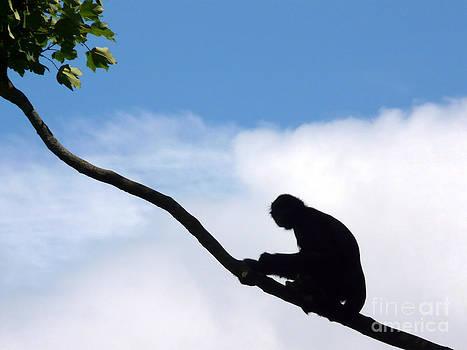 Siamang Gibbon by John Basford
