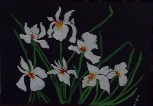 Siberian Irises by Iris Devadason