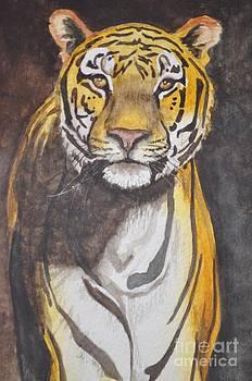 Siberian Tiger by Jolaine Goldman