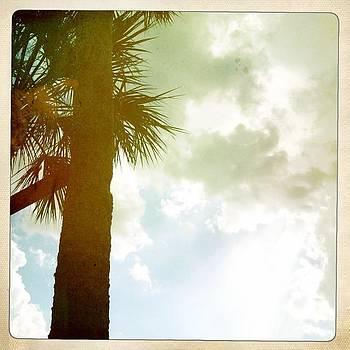 Siesta Key Palm by Dyana Jean