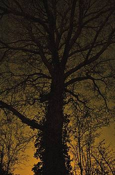 Silent Night by Tim Kahane