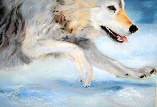 Silent Run by Deborah Voyda Rogers