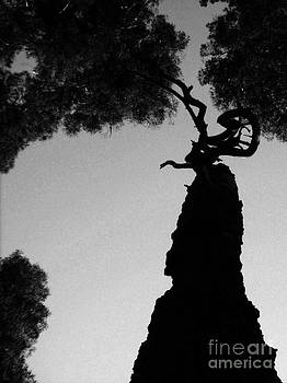 Silhouette 4 by William Randall