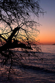 Silhouette bird filled tree by the sea at sunset in the Caribbean by Anya Brewley schultheiss