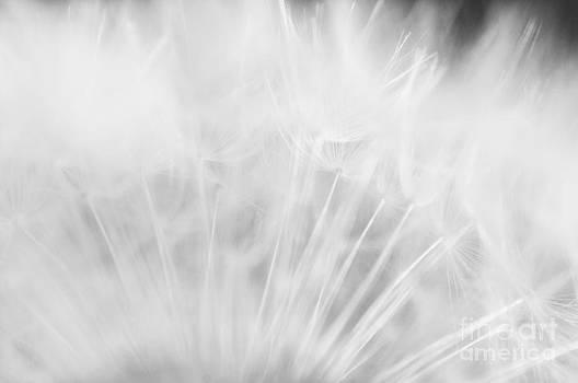 Venura Herath - Silky Softness