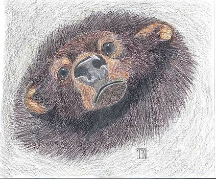 Silly Bear by Tony  Nelson