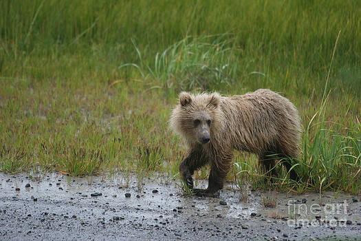 Silver Salmon Creek Alaska  by Lori Bristow
