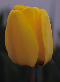 Michelle Cruz - Simplicity is Beautiful