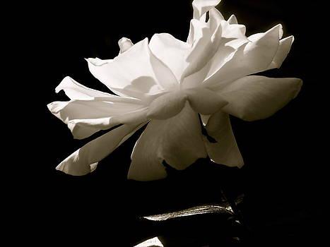 Simplistic Beauty In The Morning by Gloria Warren