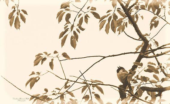 Darlene Bell - Singing In The Tree Top