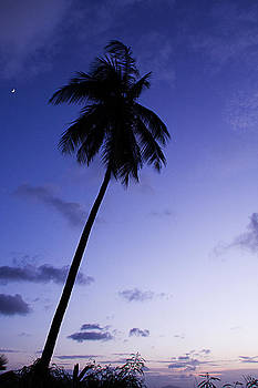Single palm tree silhouette at twilight by Anya Brewley schultheiss