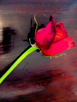 Single Red Rose by Amy Bradley