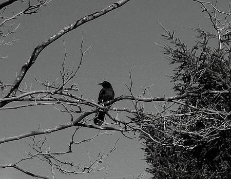 Kevin D Davis - Sittin On My Branch