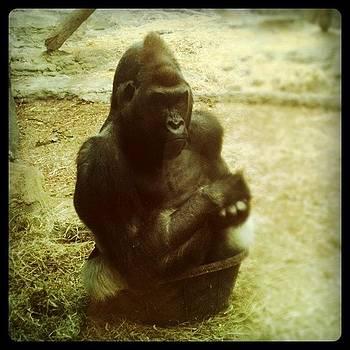 Sitting In A Bucket #zoo by Jill Jankowski