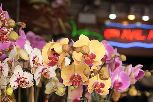 Sixth Avenue Orchids by Denice Breaux