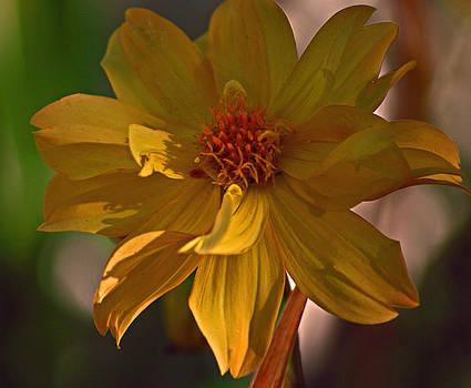 Michelle Cruz - Sizzling Yellow