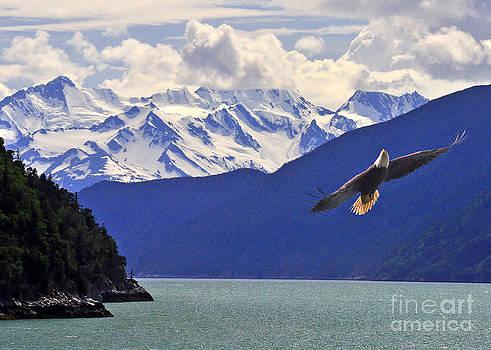 Jack Moskovita - Skagway Bald Eagle