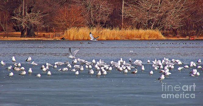 Anne Ferguson - Skating Seagulls