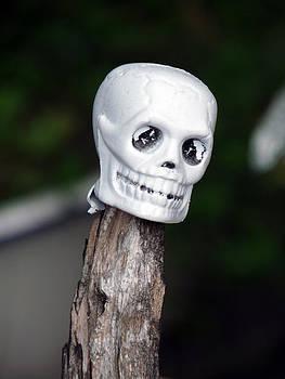 Terry Eve Tanner - Skeleton Head