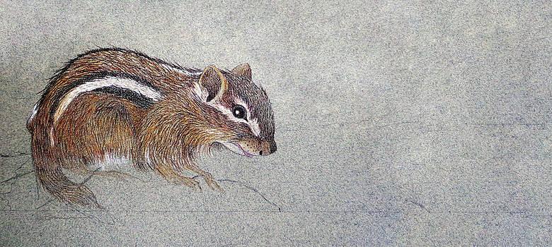 Sketch of an Eastern Chipmunk by Leslie M Browning