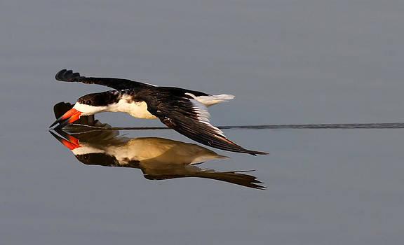 Skimming Run by Phil Lanoue