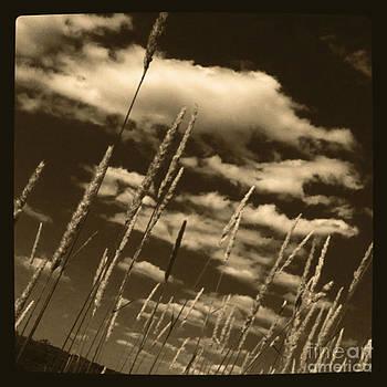 Sky Writer by Trish Hale