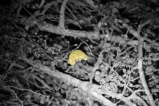 Sleeper Chameleon by Alexandra Bento