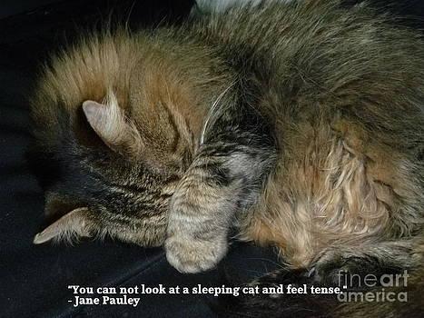 Art Studio - Sleeping Cat