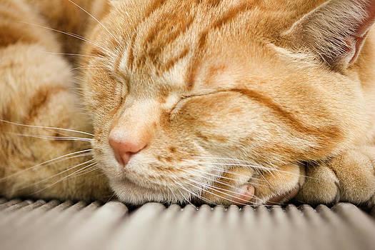Sleeping Ginger Cat by Mathew Tonkin Henwood