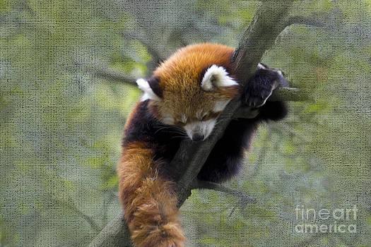Heiko Koehrer-Wagner - sleeping Small Panda
