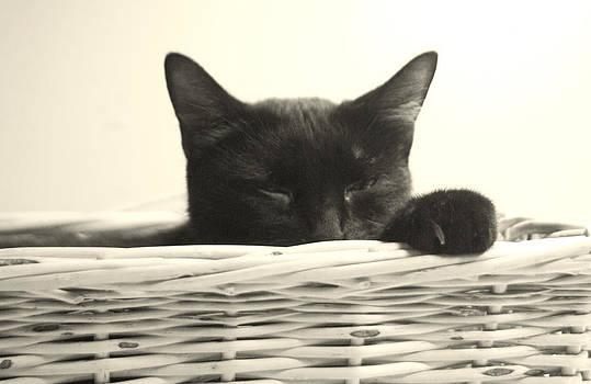 Sleepy Kitty by Bernadette Kazmarski