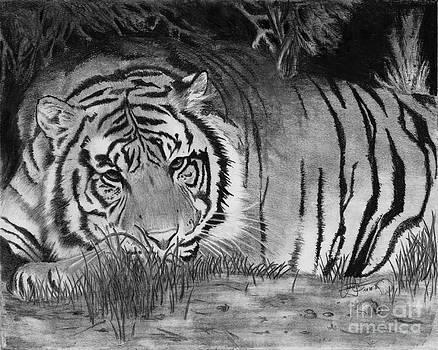 Christian Conner - Sleepy Tiger
