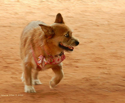 Grace Dillon - Small Dog