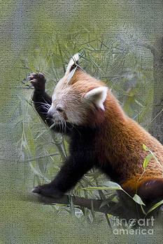 Heiko Koehrer-Wagner - Small Panda