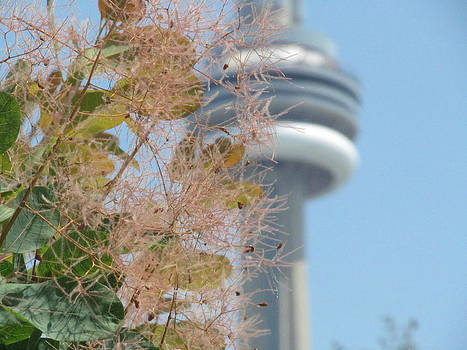 Alfred Ng - smoke bush with cn tower