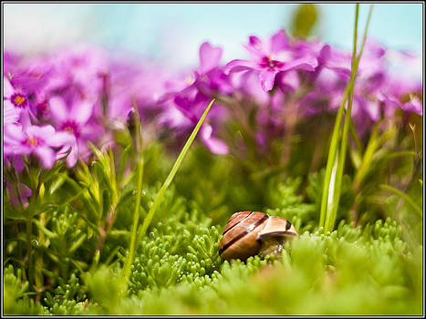 Snail  by Adrian Krol