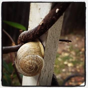#snail I Know The Feelin' by Bella Guzman