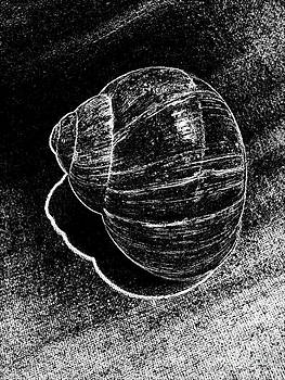Drinka Mercep - Snail Shell No.4