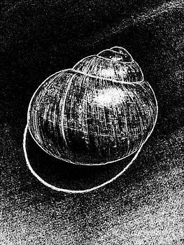 Drinka Mercep - Snail Shell No.6
