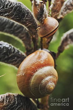 Snail Shell by Wedigo Ferchland
