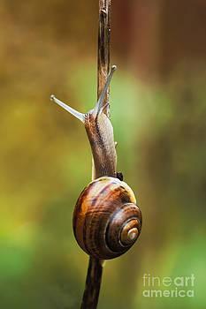 Snail by Wedigo Ferchland
