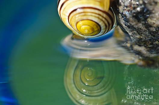 Christine Kapler - Snailing....